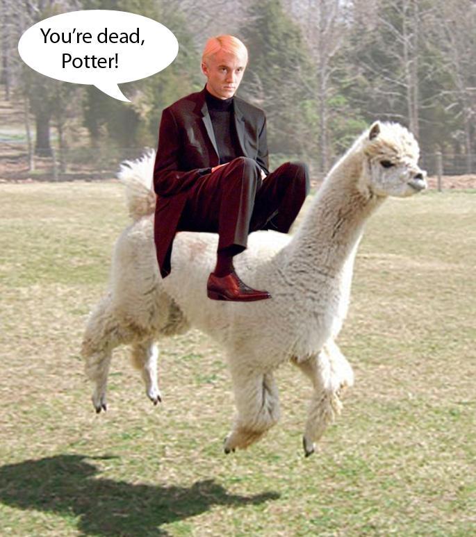 Draco Malfloy and his alpaca by pierzyna