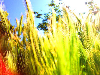 grass and nice sun effect.. by FreezDay