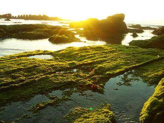 Ocean moss... by FreezDay