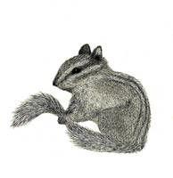Realistic Chipmunk Drawing by VexFox