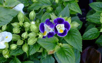 April flowers 4 by EruwaedhielElleth