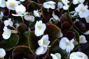 April flowers 5 by EruwaedhielElleth