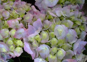 April flowers 6 by EruwaedhielElleth