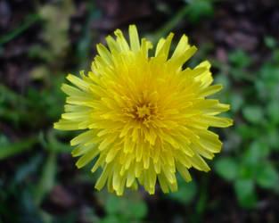 April flowers 7 by EruwaedhielElleth