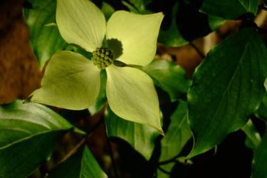 April flowers 8 by EruwaedhielElleth