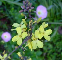April flowers 12 by EruwaedhielElleth