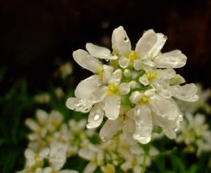 April flowers 15 by EruwaedhielElleth