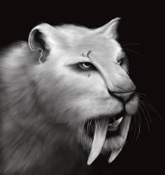 Tigre by Jackshroom