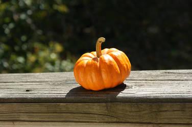 pumpkin by Kriltch