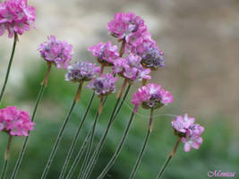 Pink flower by MonicaFlower