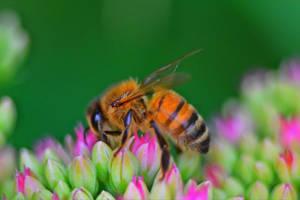 Worker Bee by sockhiddenunderarook