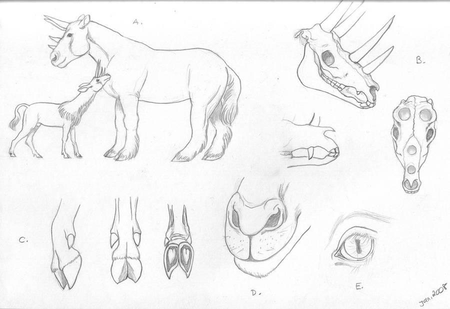 Quadricorn Anatomy By Vivienne Mercier On Deviantart
