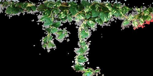 Draped Devils Ivy by LilipilySpirit