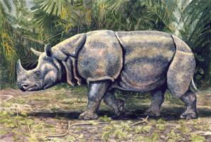 Javan Rhino by WillemSvdMerwe