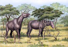 Paraceratherium transouralicum by WillemSvdMerwe
