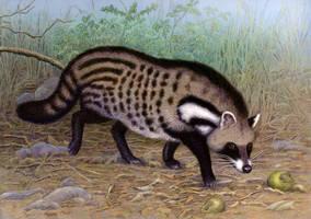 African Civet by WillemSvdMerwe
