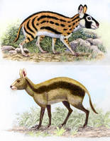Propachyrucos and Cainotherium by WillemSvdMerwe