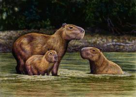 Capybaras by WillemSvdMerwe