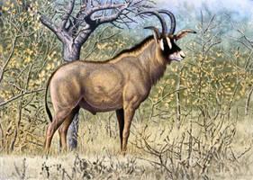 Roan Antelope by WillemSvdMerwe
