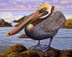 Brown Pelican by WillemSvdMerwe