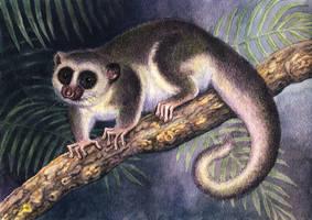 Fat-Tailed Dwarf Lemur by WillemSvdMerwe