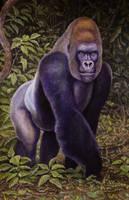 Western Lowland Gorilla by WillemSvdMerwe