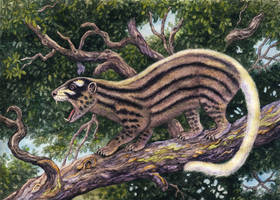 Oxyaena lupina by WillemSvdMerwe