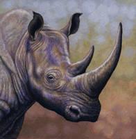 White Rhino by WillemSvdMerwe