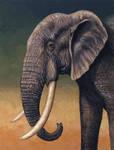 Elephant Portrait by WillemSvdMerwe