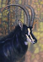Sable Antelope by WillemSvdMerwe