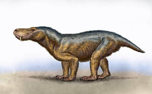 Glanosuchus macrops by WillemSvdMerwe