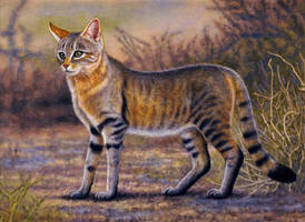 African Wild Cat by WillemSvdMerwe