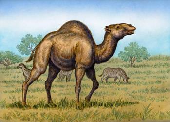 Titanotylopus nebraskensis by WillemSvdMerwe
