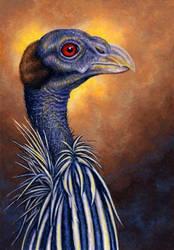Vulturine Guineafowl by WillemSvdMerwe