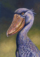 Shoebill or Whale-headed Stork by WillemSvdMerwe
