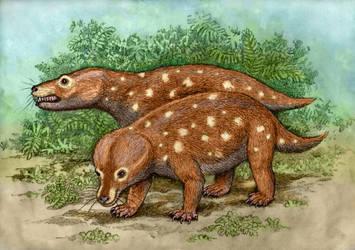 Diademodon grossarthii by WillemSvdMerwe