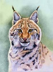 Eurasian Lynx by WillemSvdMerwe
