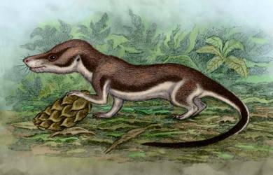 Oligokyphus triserialis by WillemSvdMerwe