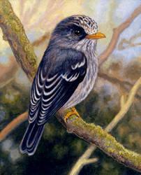 Humblot's Flycatcher by WillemSvdMerwe