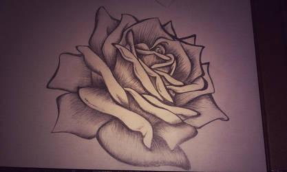 Rose by Mew-Aqua