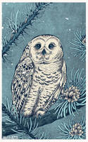 Winter Snowy Owl by AngelaRizza