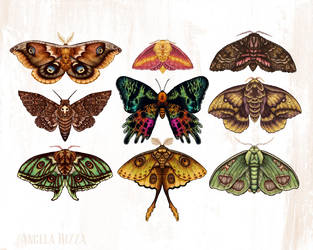 Moth Wings III by AngelaRizza