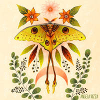 Moon Moth by AngelaRizza