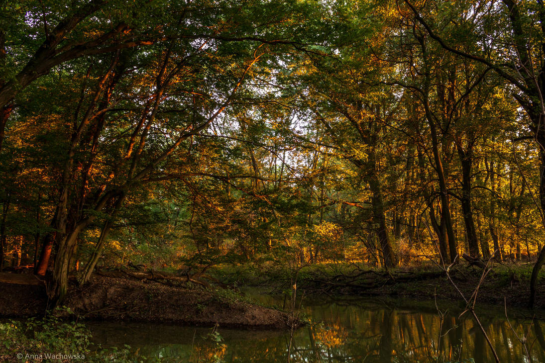 When the Autumn is coming by aniavita