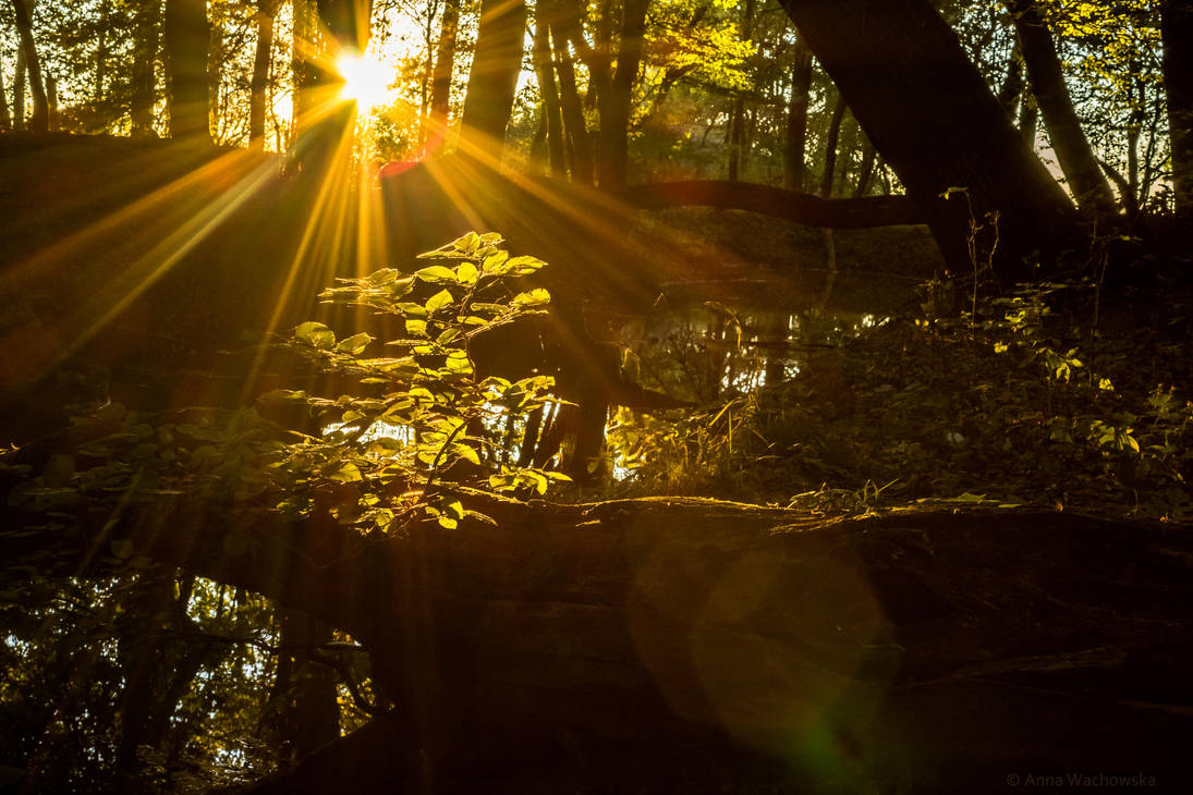The Autumnal Light by aniavita