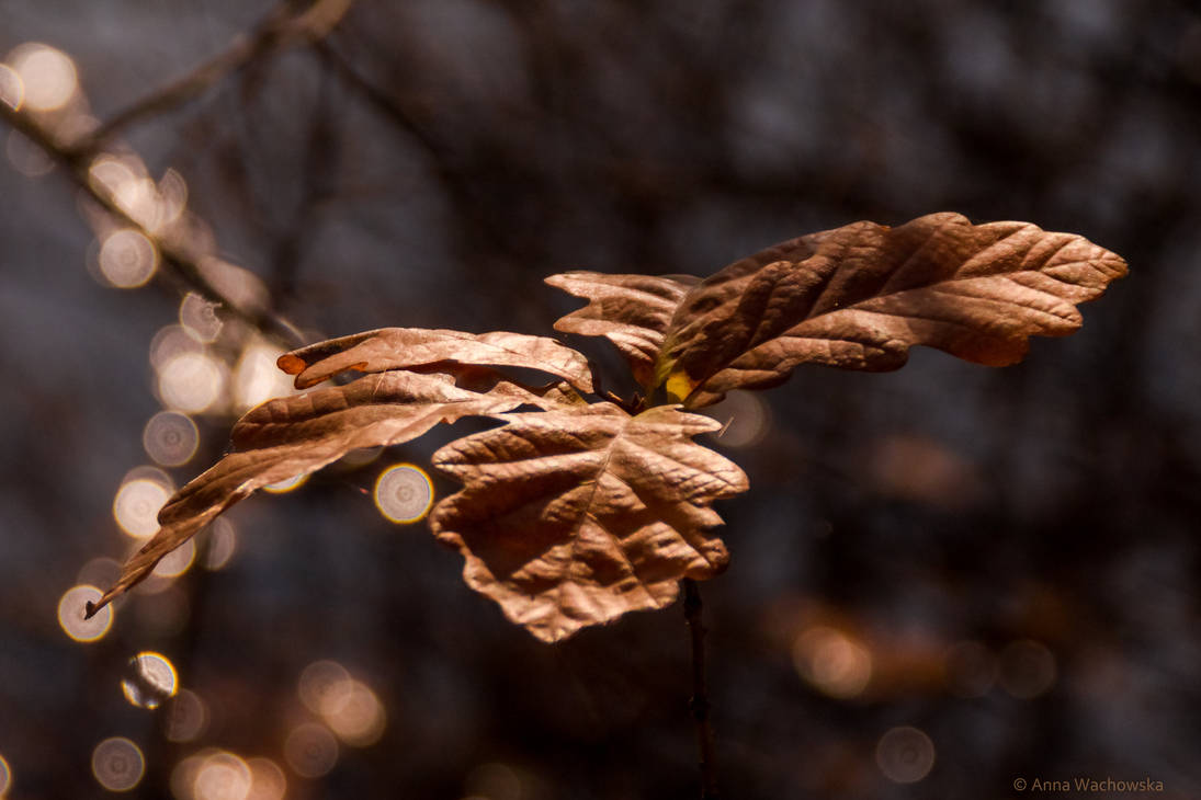 Autumn of the Young Oak by aniavita