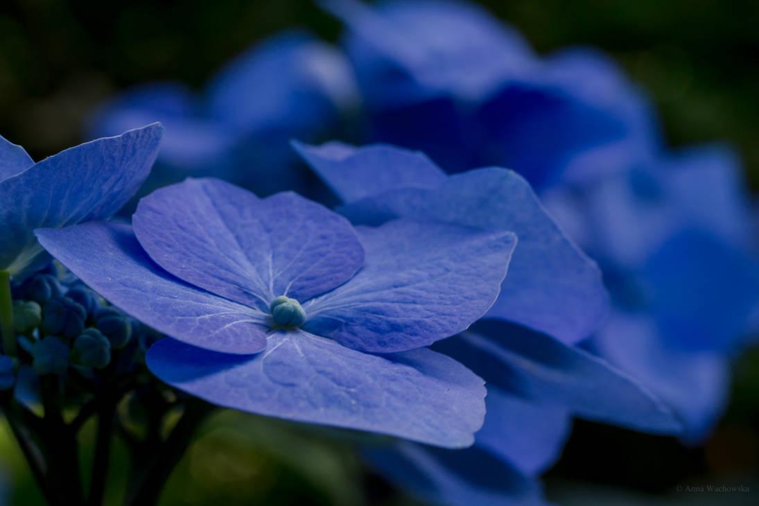 Blue shadows by aniavita