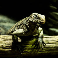 lizard by InV4d3r