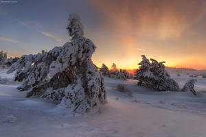 Ice Wind by Trashins