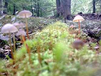 Mushroom Street by Moonmike